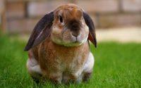 rabbit vibrator til kvinder